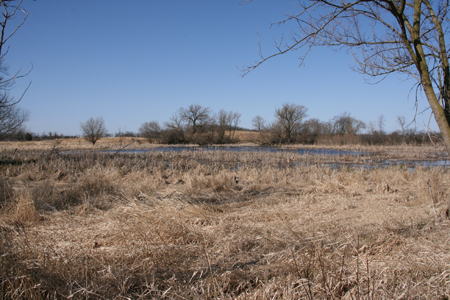 wetland-from-trail