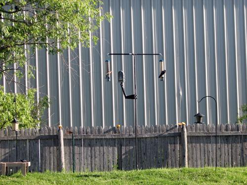 Homemade Bird Feeding Pole System Powered By Birds