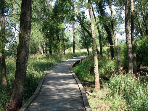 Rollins Savanna Forest Preserve