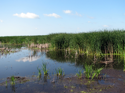 View From Dike Road, Horicon Marsh