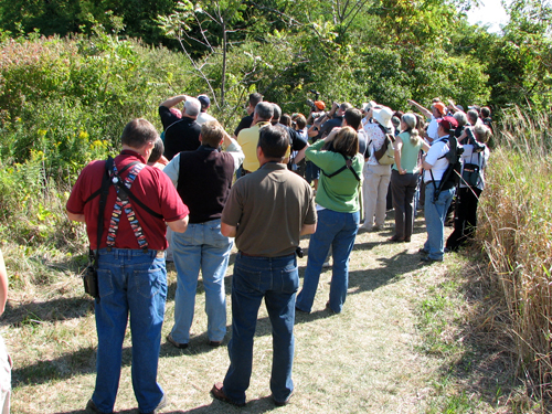 Waiting for Kirtland's Warbler