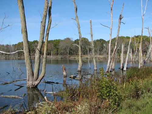Middlefork Wetland