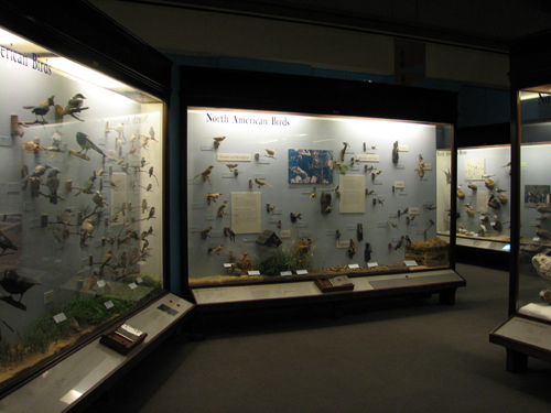 North American Birds at the Field Museum