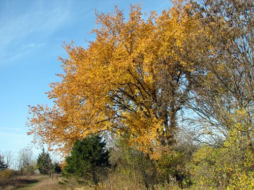 Volo Bog Trees