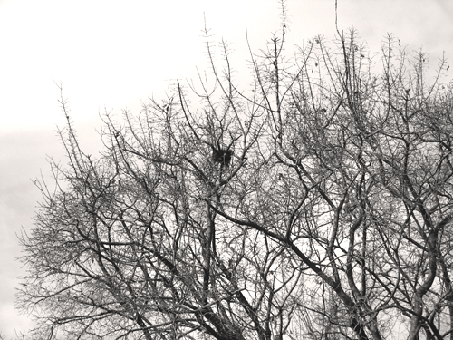 Nest in black and white