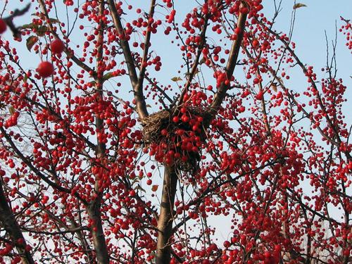 Nest in berries