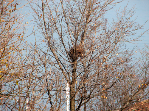 Another nest