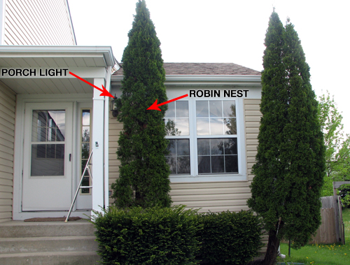 Placement of American Robin nest