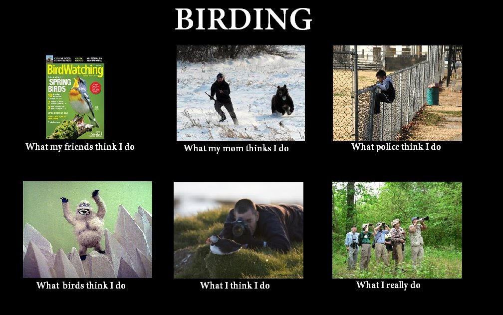 Meme Monday: What I Really Do » Powered by Birds