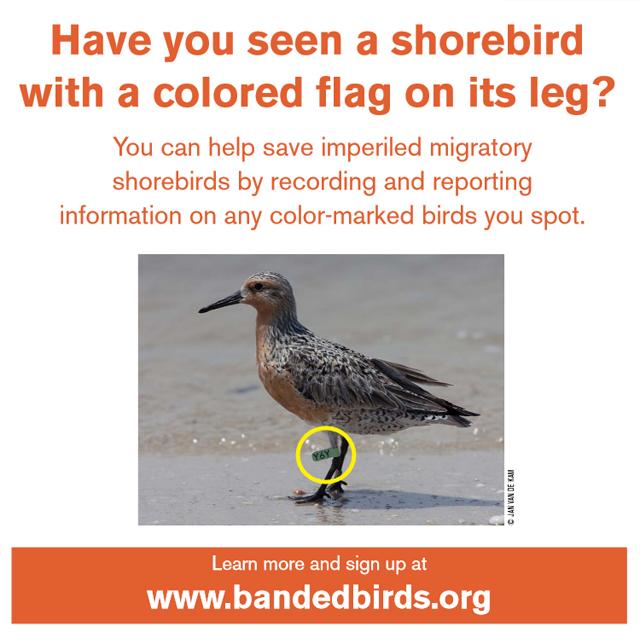 www.bandedbirds.org
