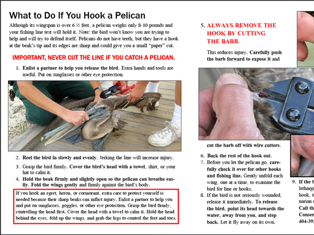 What to do if you hook a pelican